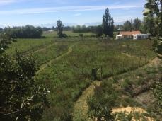 Agroforestería