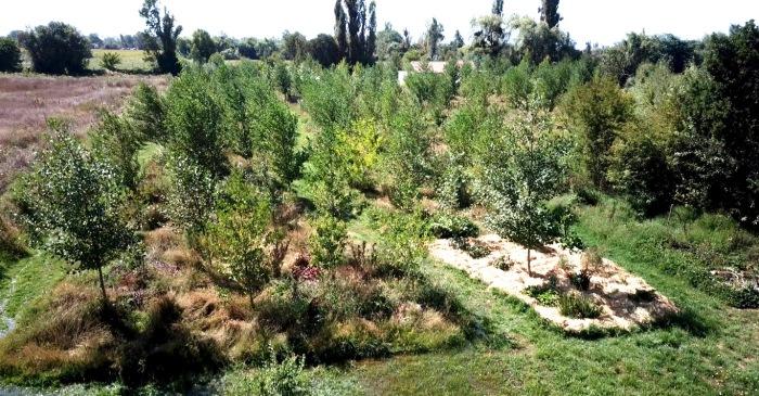 Bosque Comestible1